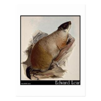 Edward Lear Murmeltier Postkarte