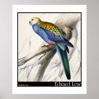 Edward Lear Paleheaded Parakeet Plakat