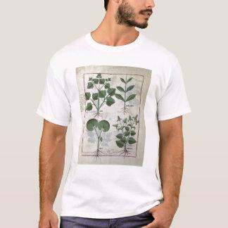 Eibisch u. Hastula Regia Asarabacca u. T-Shirt