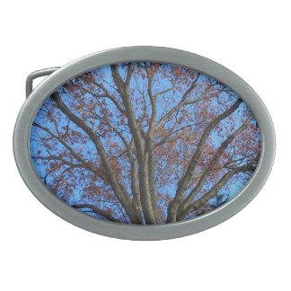 Eiche in einem blauen Herbst-Himmel - Ovale Gürtelschnallen