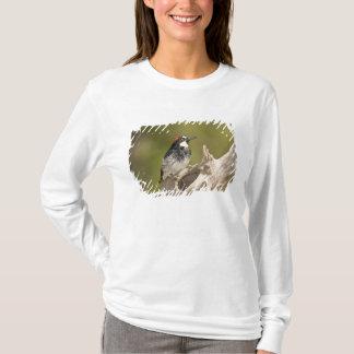Eichel-Specht, Melanerpes formicivorus, Süd T-Shirt