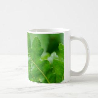 Eichen-Blätter im Frühling Kaffeetasse