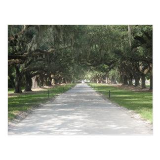 Eichen-Gasse bei Boone Hall, Charleston Postkarte