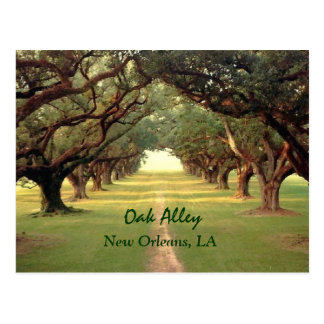 Eichen-Gassen-New- Orleanspostkarte Postkarte