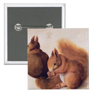 Eichhörnchen, 1512 quadratischer button 5,1 cm