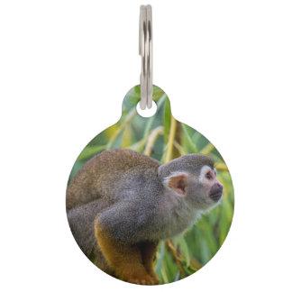 Eichhörnchen-Affe Tiernamensmarke