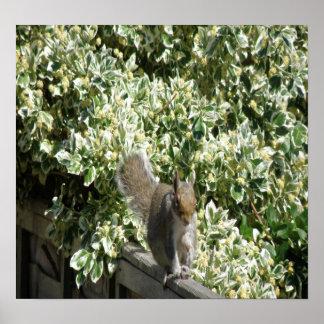 Eichhörnchen auf dem Zaun Druck Poster