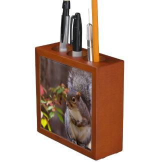Eichhörnchen bittet geduldig stifthalter