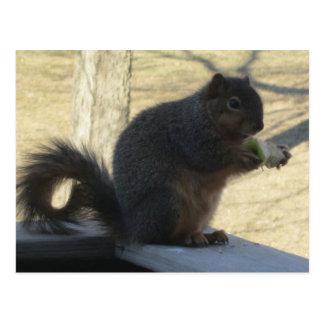 Eichhörnchen, das Apple isst Postkarten
