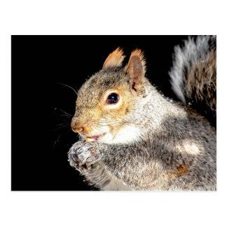 Eichhörnchen, das eine Nuss isst Postkarte