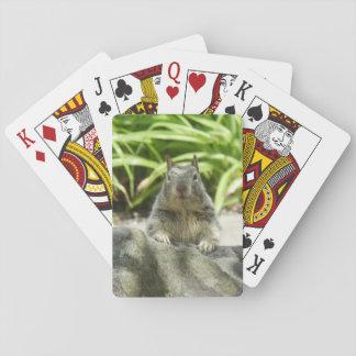 Eichhörnchen, das in den Schatten-Spielkarten Spielkarten