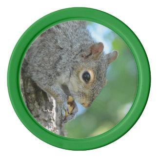 Eichhörnchen, das in einem Baum hängt Poker Chips