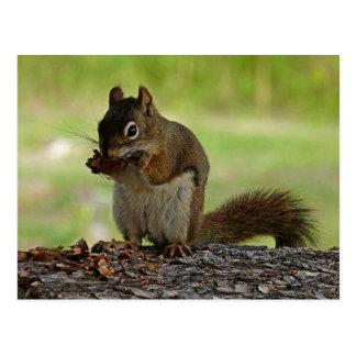 Eichhörnchen, das Kegel isst Postkarte
