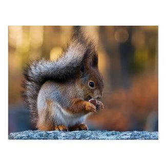 Eichhörnchen, das Plätzchen isst Postkarte