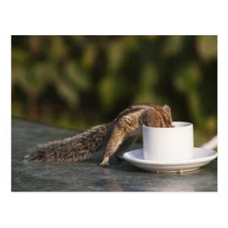 Eichhörnchen, das von der Kaffeetasse am Inder Postkarte