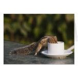 Eichhörnchen, das von der Kaffeetasse am Inder tri Karte