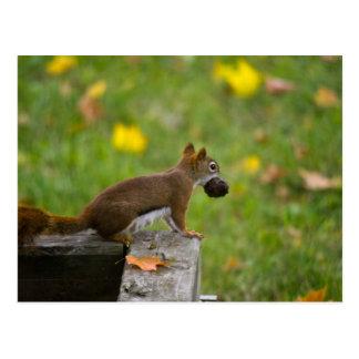 Eichhörnchen-Dieb / squirrel thief Postkarten