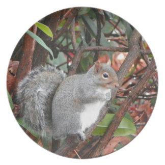 Eichhörnchen-Foto-Geschenk Flacher Teller