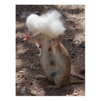 Eichhörnchen gegen Samoyed-Pelz-Postkarte Postkarte