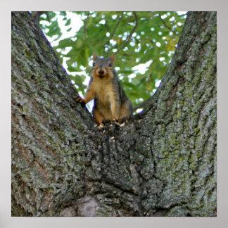 Eichhörnchen Geschenken Baum in den fantasiereiche Poster