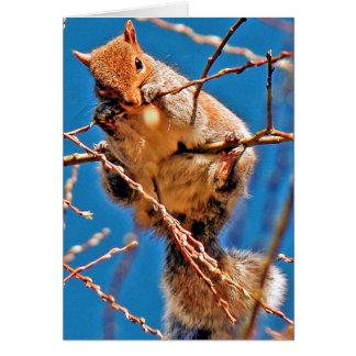 Eichhörnchen (grau) karte