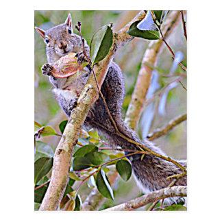 Eichhörnchen-Grau (Kentucky und North Carolina) Postkarte