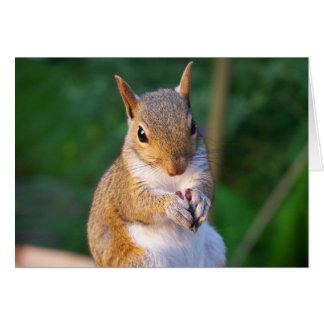 Eichhörnchen-Gruß-Karte Karte