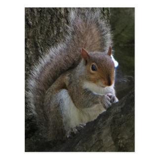 Eichhörnchen im Baum Postkarten