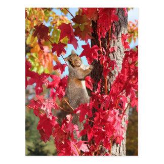 Eichhörnchen im roten Herbstbaum Postkarte