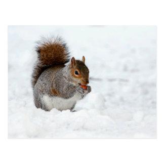 Eichhörnchen im Schnee mit Beeren-Postkarte Postkarte