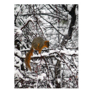 Eichhörnchen im Schnee Postkarte