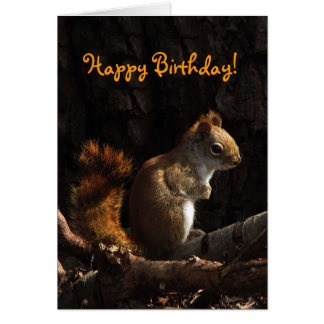 Eichhörnchen-im Sonnenlicht Geburtstag Karte