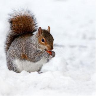 Eichhörnchen im Winter Photostatue