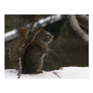 Eichhörnchen im Winter Postkarte