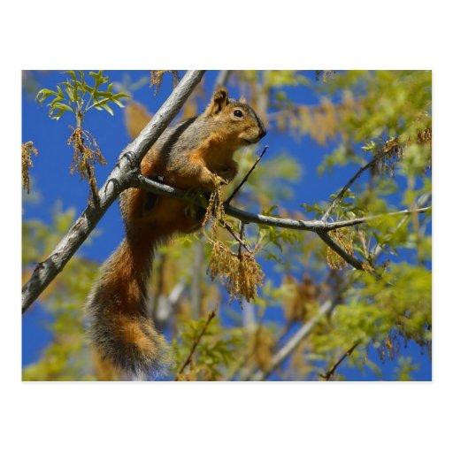 Eichhörnchen in der Baum Postkarte