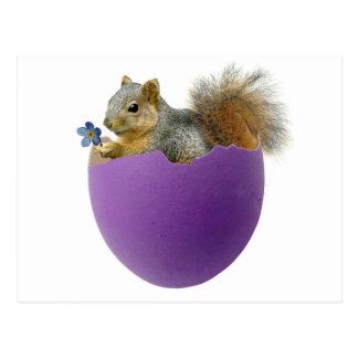 Eichhörnchen in der Eierschalen-Postkarte