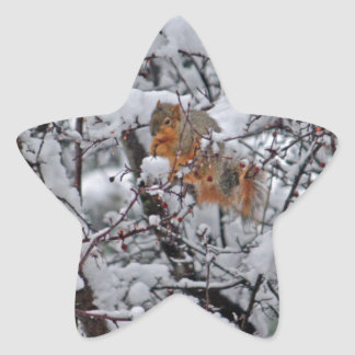 Eichhörnchen in einem Snowy-Baum 6206 Stern-Aufkleber