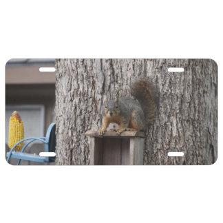 Eichhörnchen-Kfz-Kennzeichen US Nummernschild