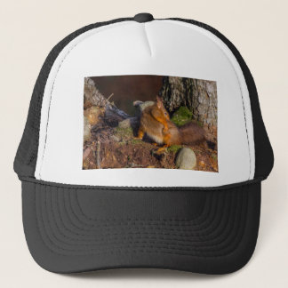 Eichhörnchen mit einem Jucken Truckerkappe