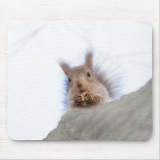 Eichhörnchen mit einer Walnuss Mousepad