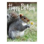 Eichhörnchen mit Gänseblümchen-alles- Gute zum Geb Postkarten