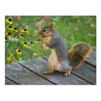 Eichhörnchen mit Keks / Squirrel with cookie Postkarten
