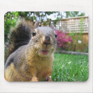 Eichhörnchen-Nahaufnahme Mauspad