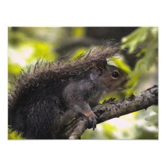 Eichhörnchen Photo Druck