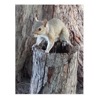 Eichhörnchen Postkarte