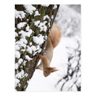 Eichhörnchen Postkarten
