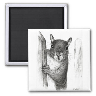 Eichhörnchen Quadratischer Magnet