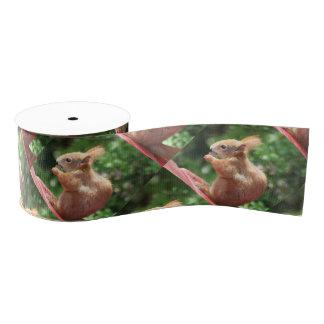 Eichhörnchen Ripsband