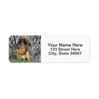 Eichhörnchen-Rücksendeadressen-Aufkleber Rücksendeetikett