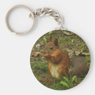 Eichhörnchen Schlüsselbänder